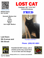 Fred is missing Millenium Park area Castlegar