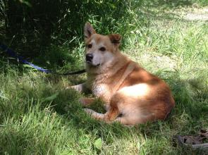 Rusty is a rescue dog from Mexico,  is healthy and happy and looking for his full time loving  home!