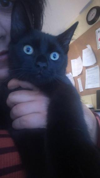 Beautiful black shorthaired boy.Very affectionate