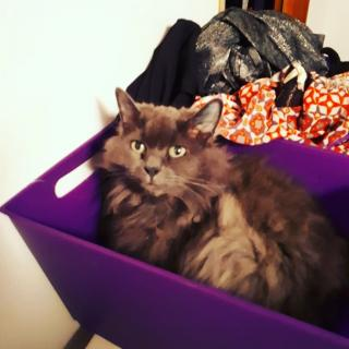 She fits, and always sits lol.