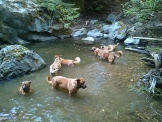 Timber and family enjoying a cool pool