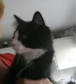 Lost 1 yr old black and white cat